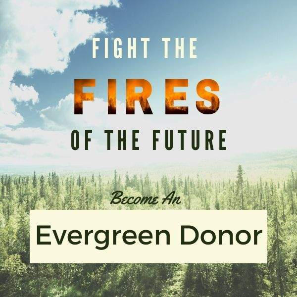 Evergreen Donor Fires